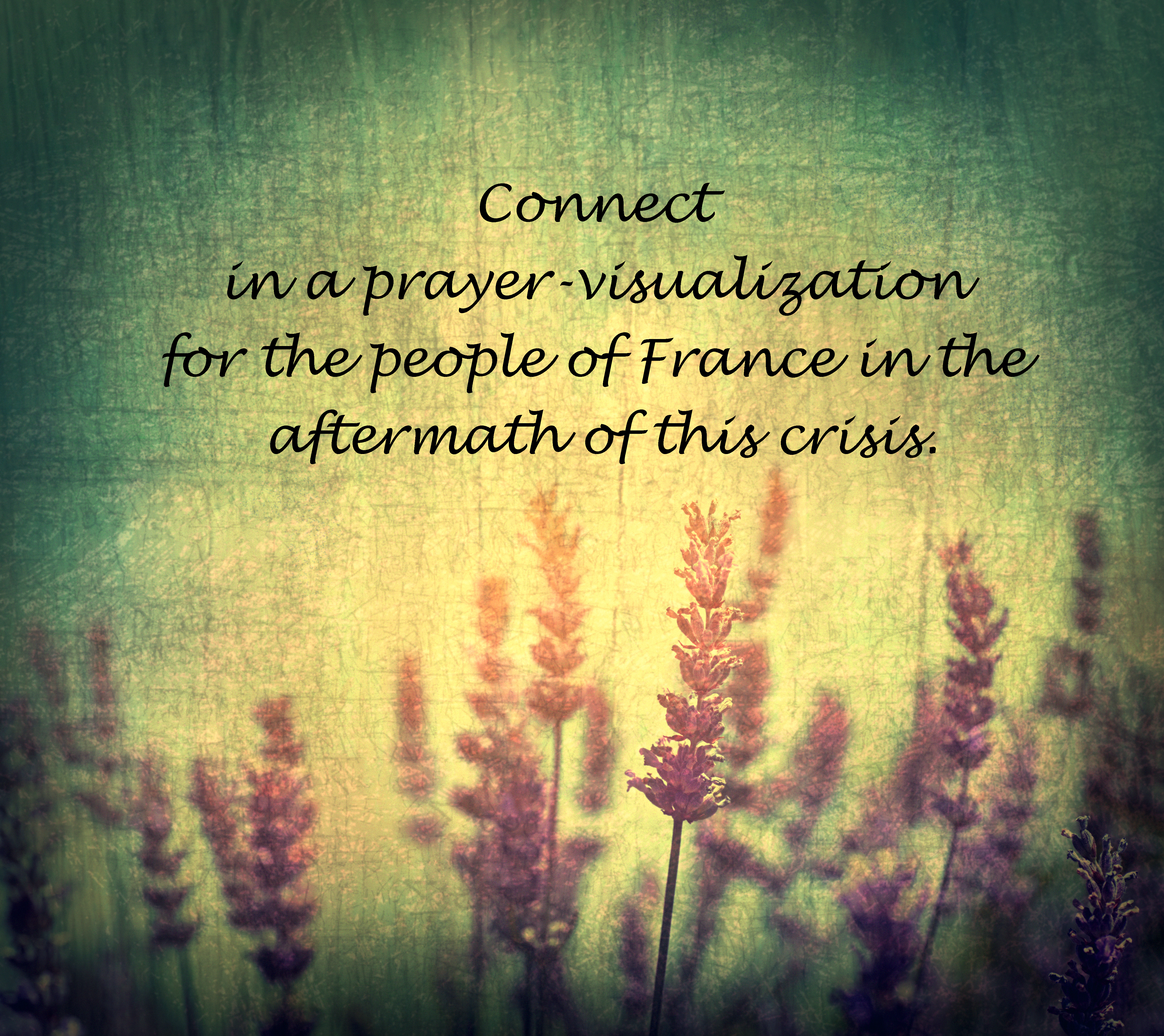 Prayer for France: Lavender Flowers